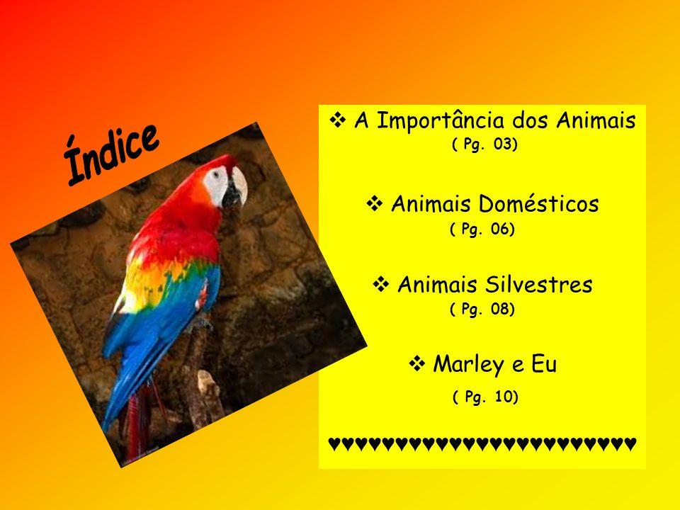  A Importância dos Animais ( Pg. 03)  Animais Domésticos ( Pg. 06)  Animais Silvestres ( Pg. 08)  Marley e Eu ( Pg. 10) ♥♥♥♥♥♥♥♥♥♥♥♥♥♥♥♥♥♥♥♥♥♥♥