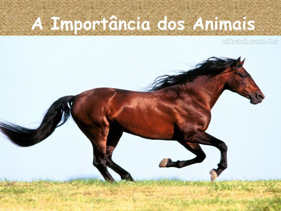 Os animais são muito importantes, porque eles ajudam de diversas formas na cadeia alimentar do mundo.
