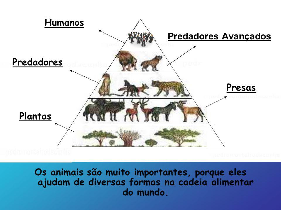 Os animais são muito importantes, porque eles ajudam de diversas formas na cadeia alimentar do mundo. Predadores Avançados Presas Predadores Plantas H