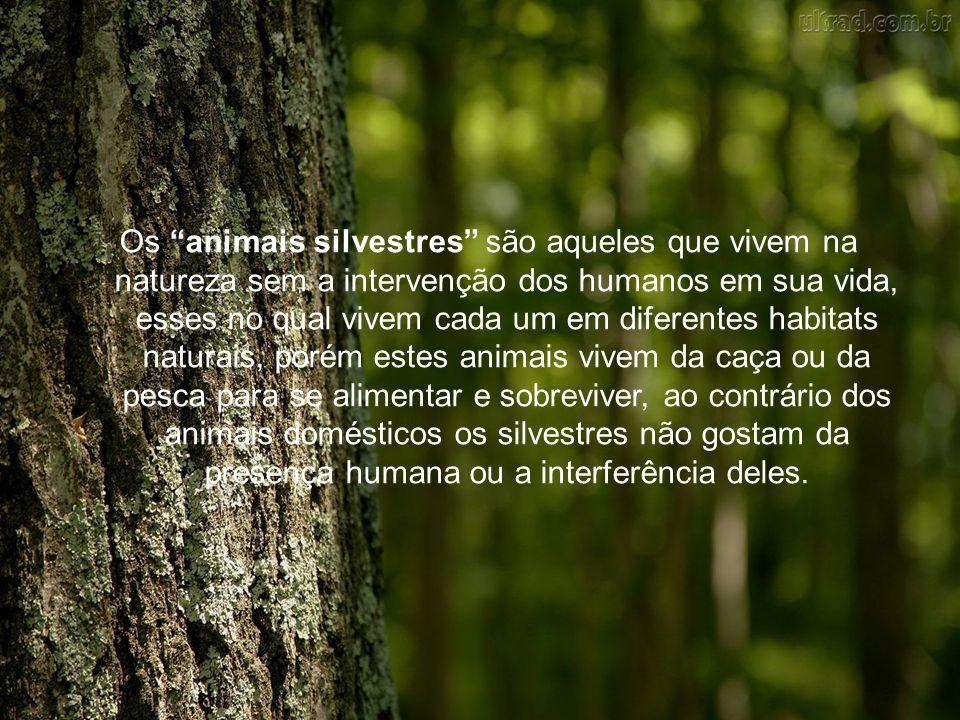 """Os """"animais silvestres"""" são aqueles que vivem na natureza sem a intervenção dos humanos em sua vida, esses no qual vivem cada um em diferentes habitat"""