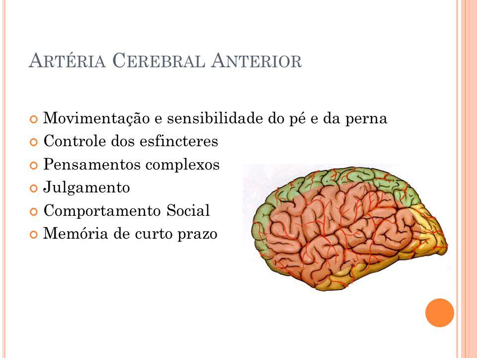A RTÉRIA C EREBRAL A NTERIOR Movimentação e sensibilidade do pé e da perna Controle dos esfincteres Pensamentos complexos Julgamento Comportamento Soc