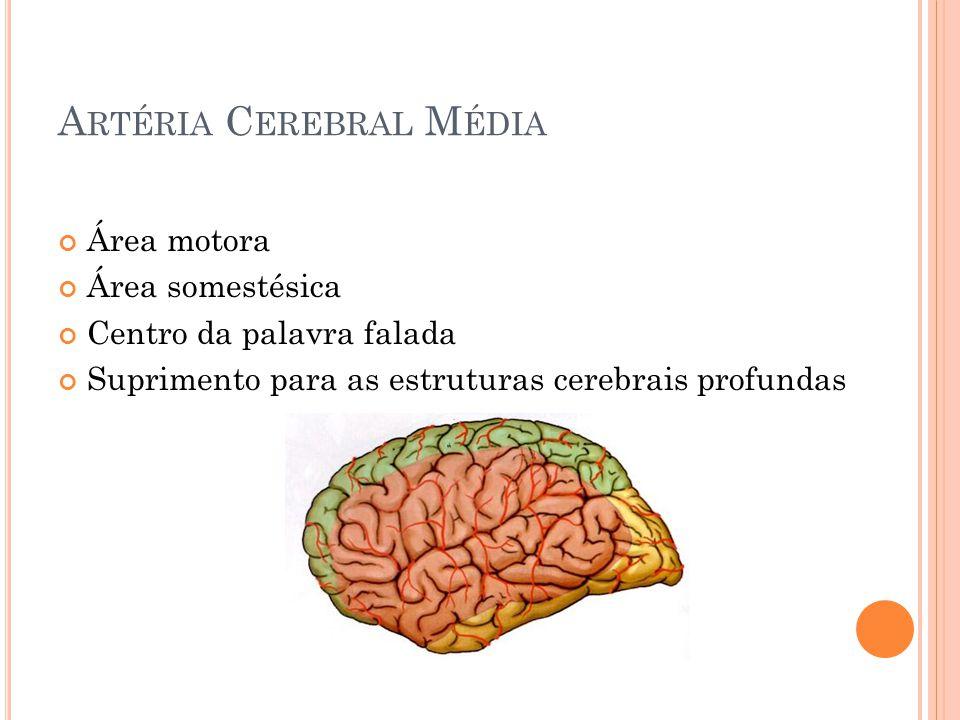 A RTÉRIA C EREBRAL M ÉDIA Área motora Área somestésica Centro da palavra falada Suprimento para as estruturas cerebrais profundas