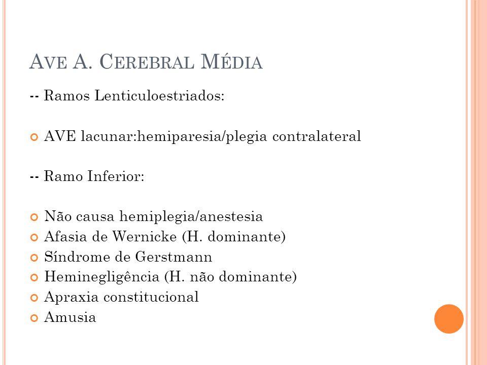 -- Ramos Lenticuloestriados: AVE lacunar:hemiparesia/plegia contralateral -- Ramo Inferior: Não causa hemiplegia/anestesia Afasia de Wernicke (H. domi