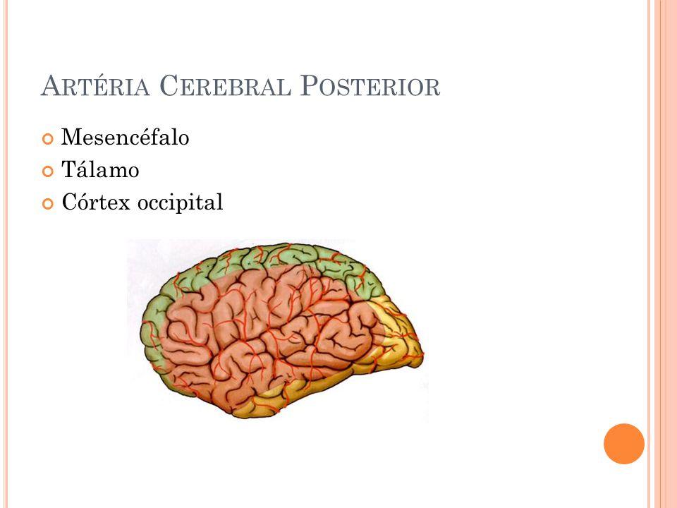 A RTÉRIA C EREBRAL P OSTERIOR Mesencéfalo Tálamo Córtex occipital