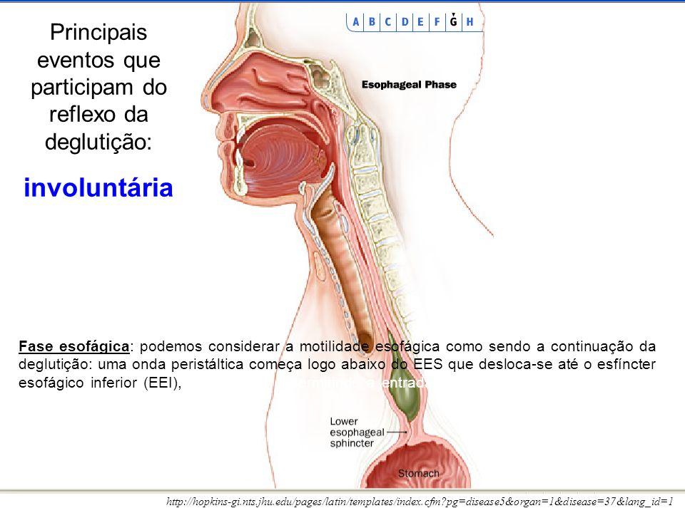 http://hopkins-gi.nts.jhu.edu/pages/latin/templates/index.cfm?pg=disease5&organ=1&disease=37&lang_id=1 Fase esofágica: podemos considerar a motilidade