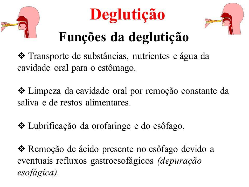 A deglutição pode ser dividida em 3 estágios (ou fases): oral, faringeo e esofágico.