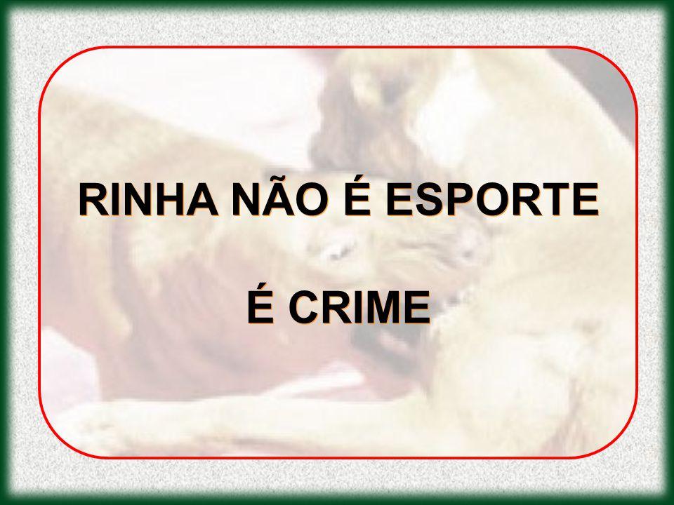 RINHA NÃO É ESPORTE É CRIME RINHA NÃO É ESPORTE É CRIME