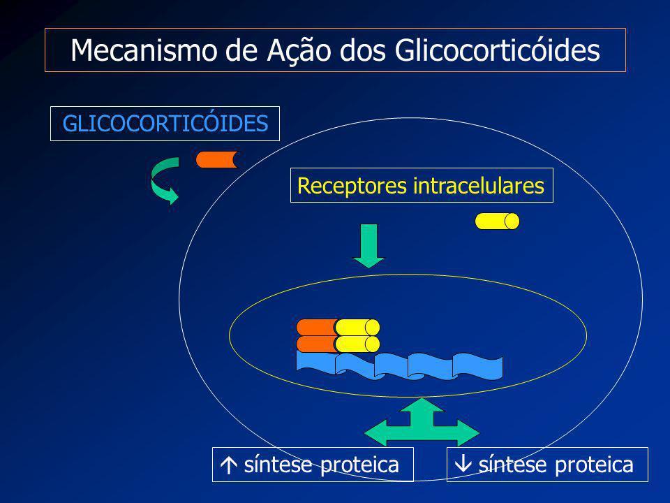 Mecanismo de Ação dos Glicocorticóides GLICOCORTICÓIDES Receptores intracelulares  síntese proteica  síntese proteica
