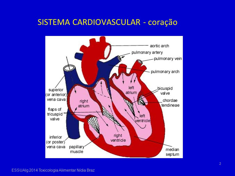 2 SISTEMA CARDIOVASCULAR - coração ESSUAlg 2014 Toxicologia Alimentar Nídia Braz