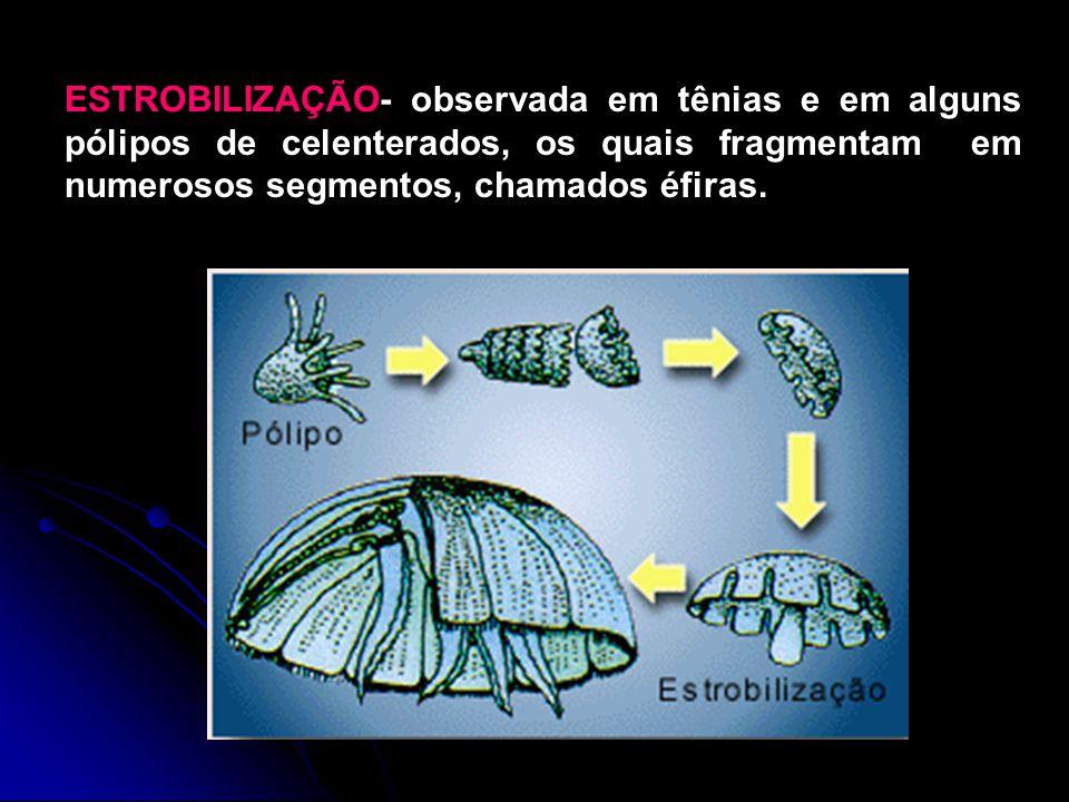 REGENERAÇÃO Alguns animais possuem um extraordinário poder de regeneração.