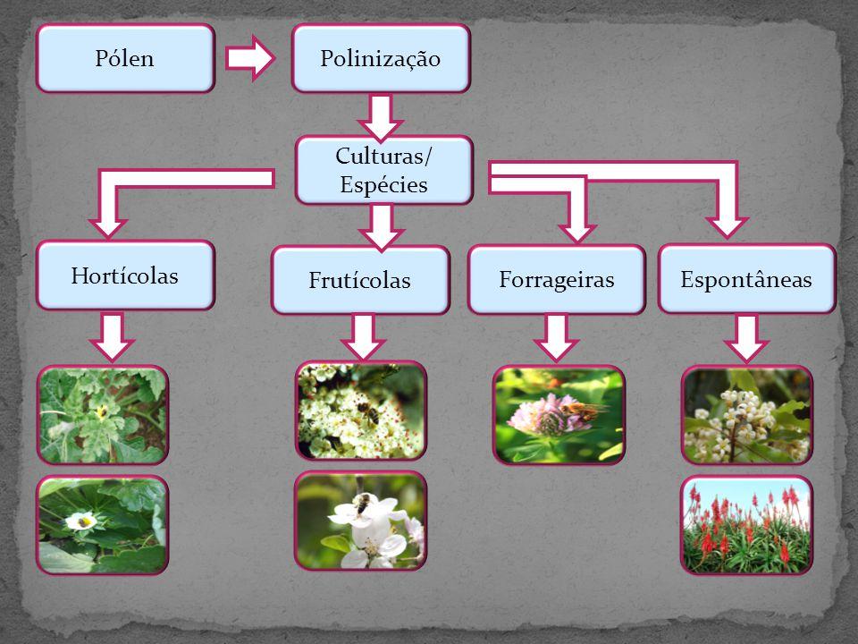 PolinizaçãoPólen Culturas/ Espécies Hortícolas Frutícolas Espontâneas Forrageiras