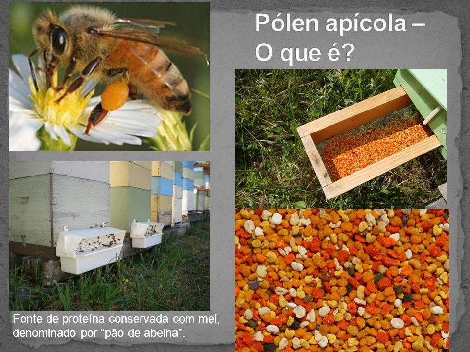 """Fonte de proteína conservada com mel, denominado por """"pão de abelha""""."""