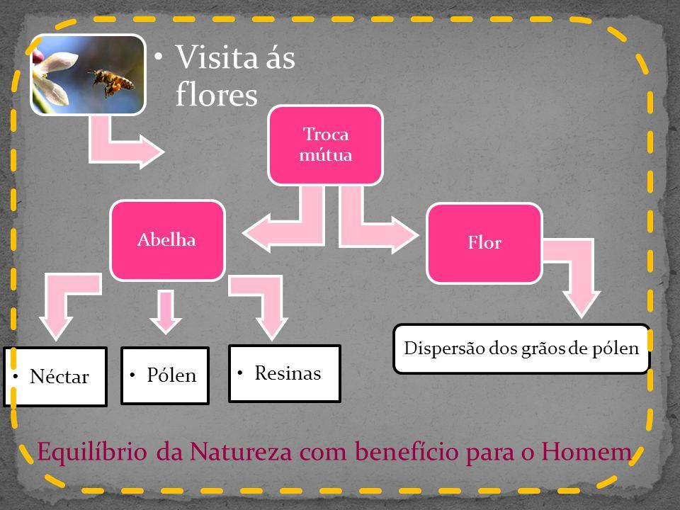 Resinas Pólen Néctar Equilíbrio da Natureza com benefício para o Homem