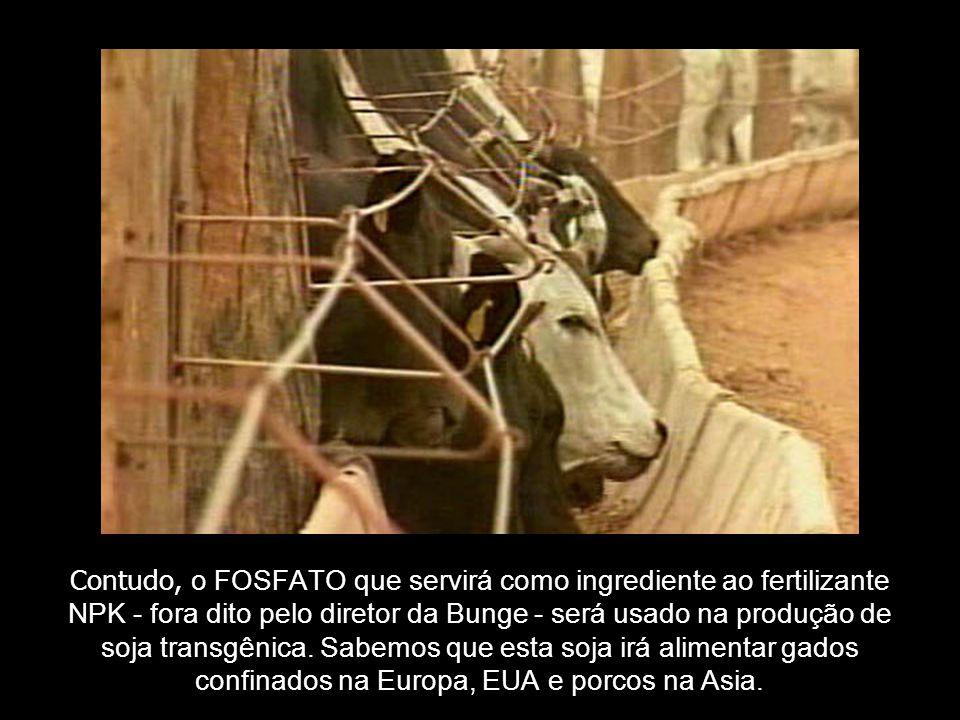 Contudo, o FOSFATO que servirá como ingrediente ao fertilizante NPK - fora dito pelo diretor da Bunge - será usado na produção de soja transgênica. Sa