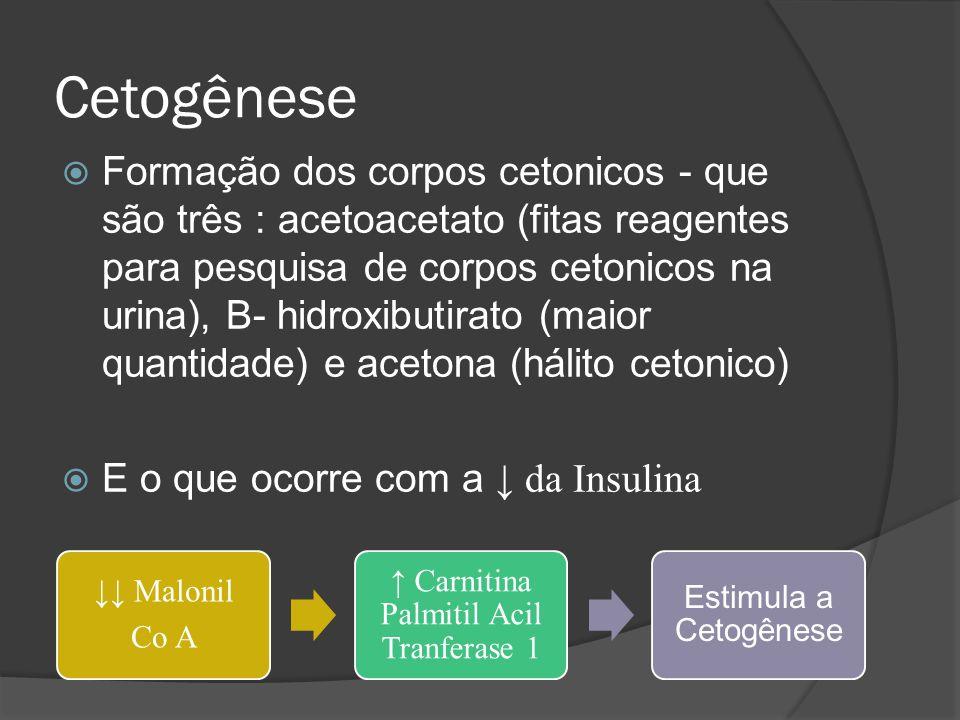 Cetogênese  Formação dos corpos cetonicos - que são três : acetoacetato (fitas reagentes para pesquisa de corpos cetonicos na urina), B- hidroxibutirato (maior quantidade) e acetona (hálito cetonico)  E o que ocorre com a ↓ da Insulina ↓↓ Malonil Co A ↑ Carnitina Palmitil Acil Tranferase 1 Estimula a Cetogênese