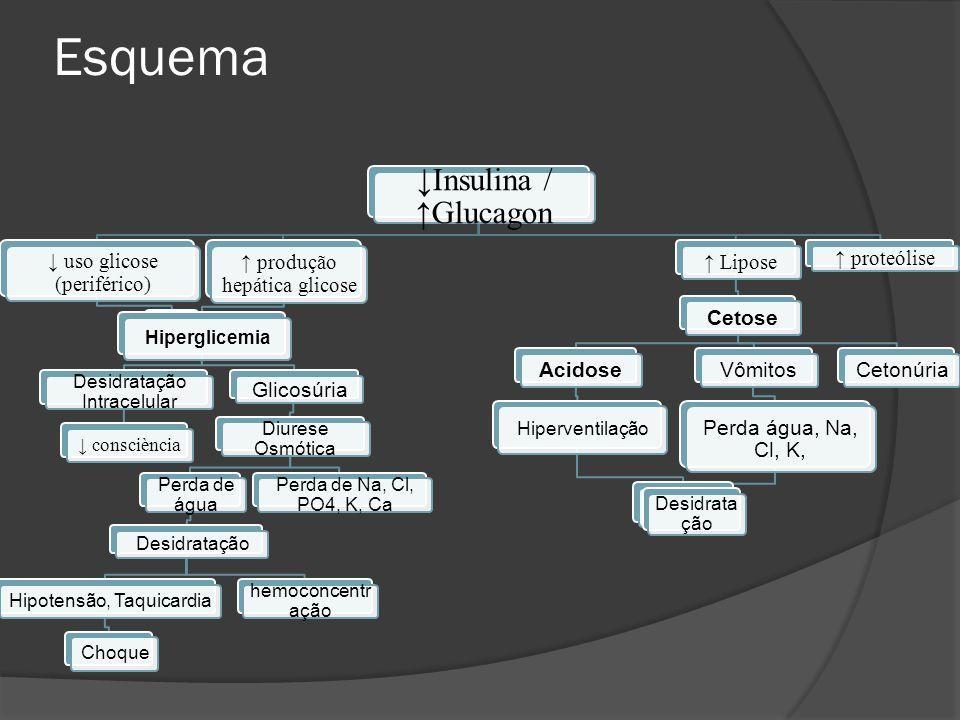 Esquema ↓Insulina / ↑Glucagon ↓ uso glicose (periférico) ↑ produção hepática glicose Hiperglicemia Desidratação Intracelular ↓ consciència Glicosúria Diurese Osmótica Perda de água Desidratação Hipotensão, TaquicardiaChoque hemoconcentr ação Perda de Na, Cl, PO4, K, Ca ↑ Lipose CetoseAcidose Hiperventilação Vômitos Perda água, Na, Cl, K, Desidrata ção Cetonúria ↑ proteólise