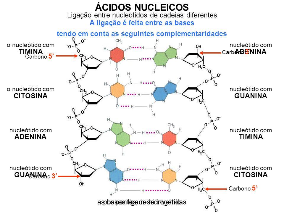 Ligação entre nucleótidos de cadeias diferentes ÁCIDOS NUCLEICOS A ligação é feita entre as bases tendo em conta as seguintes complementaridades o nuc