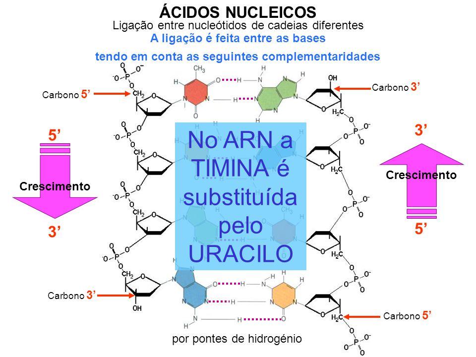 Ligação entre nucleótidos de cadeias diferentes ÁCIDOS NUCLEICOS A ligação é feita entre as bases tendo em conta as seguintes complementaridades Carbono 5' Carbono 3' por pontes de hidrogénio Carbono 3' 3' Crescimento 5' Crescimento 3' No ARN a TIMINA é substituída pelo URACILO