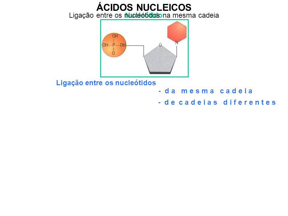 ÁCIDOS NUCLEICOS Nucleótido Ligação entre os nucleótidos - d a m e s m a c a d e i a - d e c a d e i a s d i f e r e n t e s Ligação entre os nucleóti