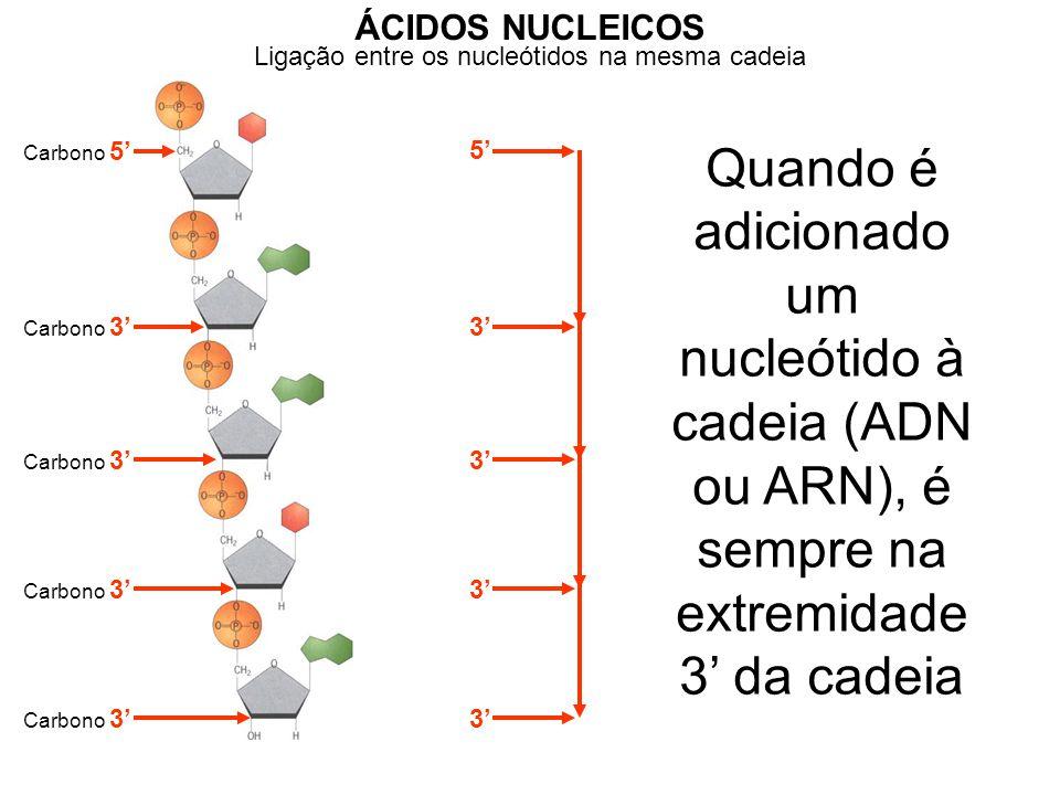 Ligação entre os nucleótidos na mesma cadeia ÁCIDOS NUCLEICOS Carbono 5' Carbono 3' 5' 3' Quando é adicionado um nucleótido à cadeia (ADN ou ARN), é sempre na extremidade 3' da cadeia Ligação entre nucleótidos de cadeias diferentes