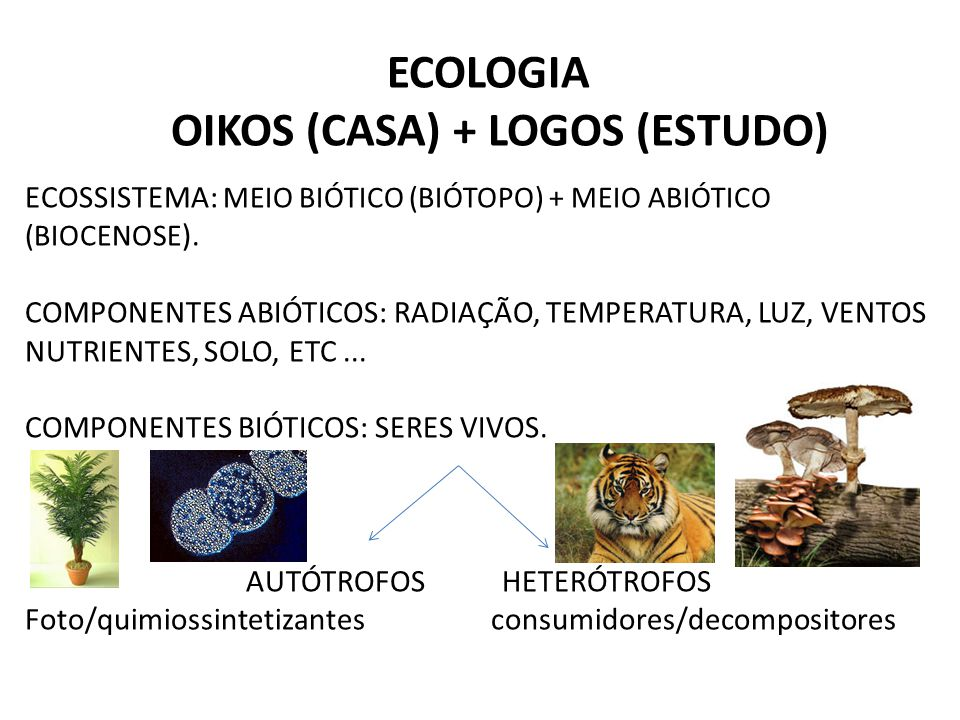 ECOLOGIA OIKOS (CASA) + LOGOS (ESTUDO) ECOSSISTEMA: MEIO BIÓTICO (BIÓTOPO) + MEIO ABIÓTICO (BIOCENOSE ). COMPONENTES ABIÓTICOS: RADIAÇÃO, TEMPERATURA,
