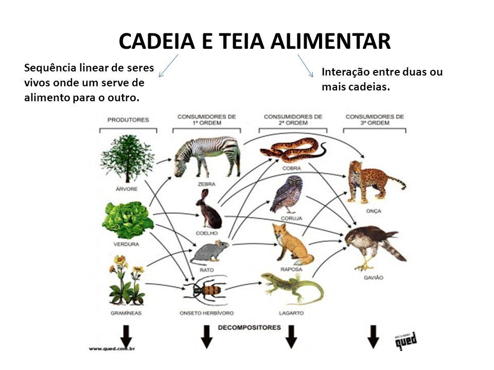 CADEIA E TEIA ALIMENTAR Sequência linear de seres vivos onde um serve de alimento para o outro. Interação entre duas ou mais cadeias.