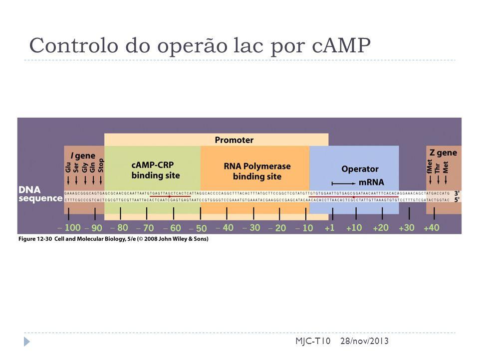 Controlo do operão lac por cAMP MJC-T1028/nov/2013