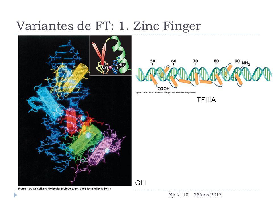 Variantes de FT: 1. Zinc Finger MJC-T10 TFIIIA GLI 28/nov/2013