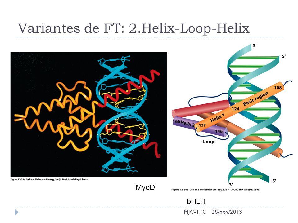 Variantes de FT: 2.Helix-Loop-Helix MJC-T10 bHLH MyoD 28/nov/2013