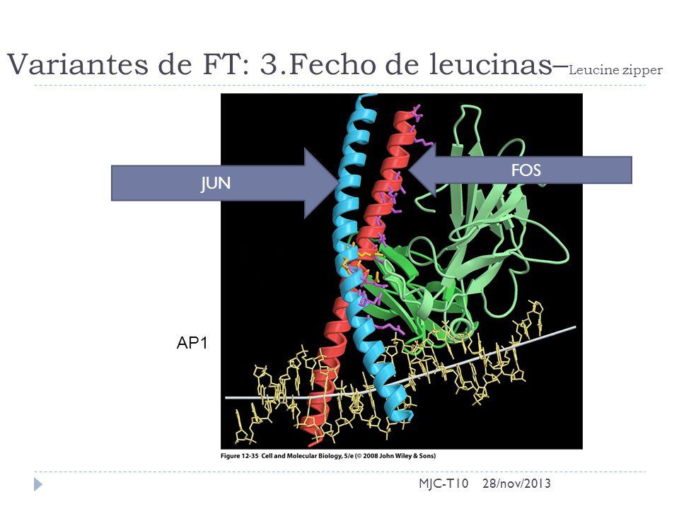 Variantes de FT: 3.Fecho de leucinas– Leucine zipper MJC-T10 AP1 FOS JUN 28/nov/2013