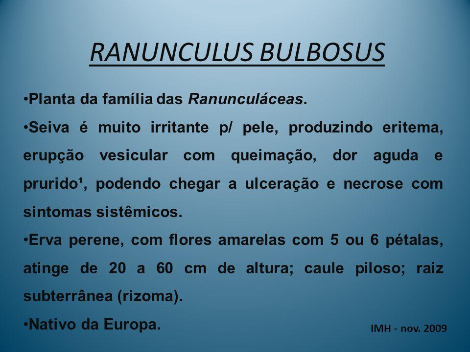 RANUNCULUS BULBOSUS Planta da família das Ranunculáceas.