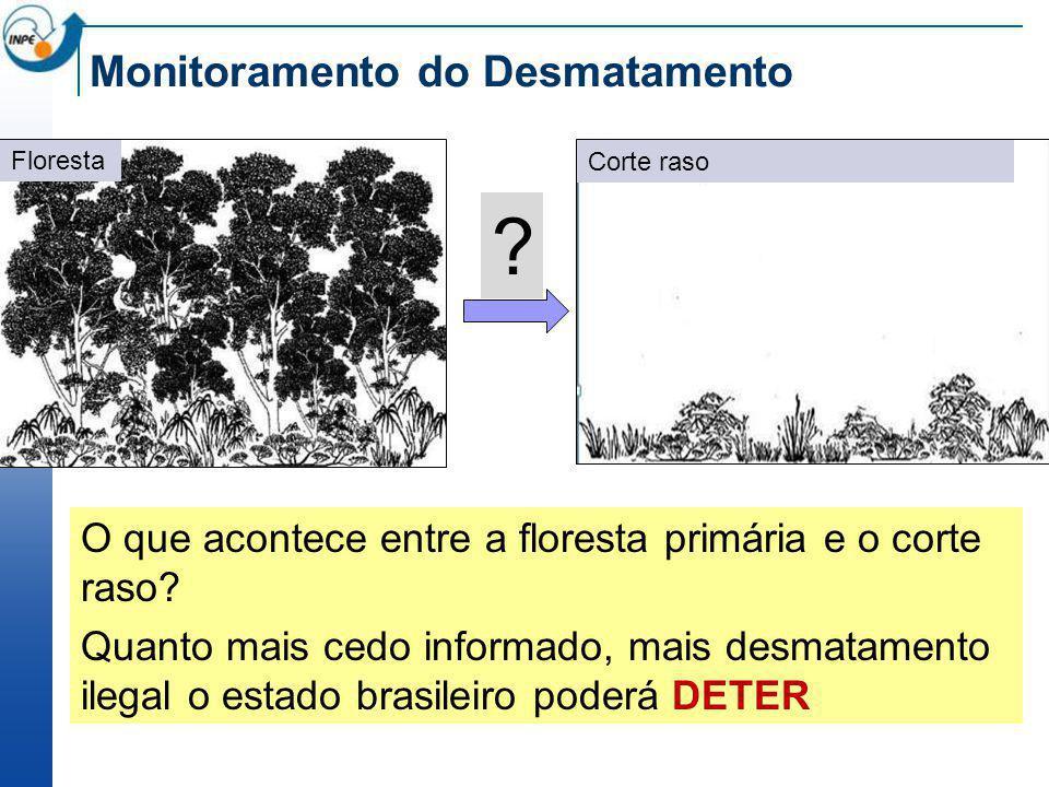 Monitoramento do Desmatamento Floresta Corte raso O que acontece entre a floresta primária e o corte raso? Quanto mais cedo informado, mais desmatamen