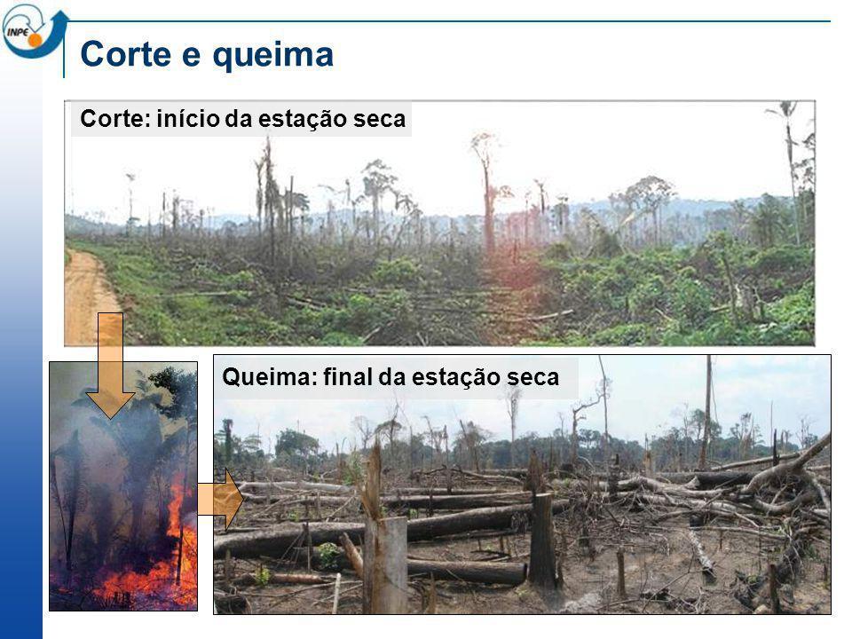 Corte e queima – estágios finais Derrubada e queimada recente ) Árvores remanescentes (mortas)