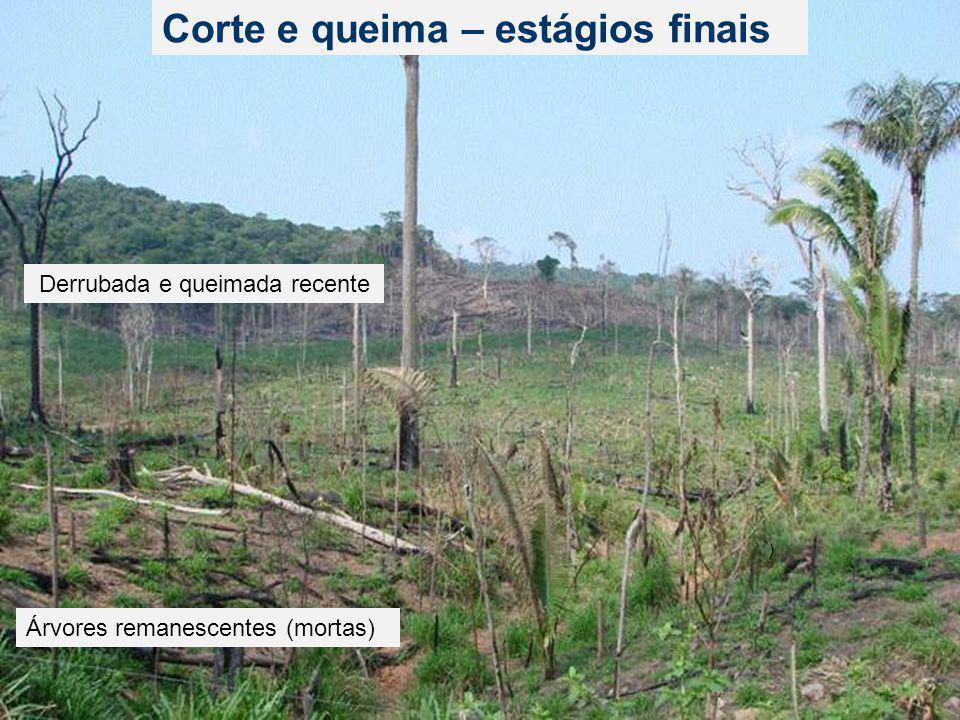 Novos desmatamentos detectados em imagem MODIS