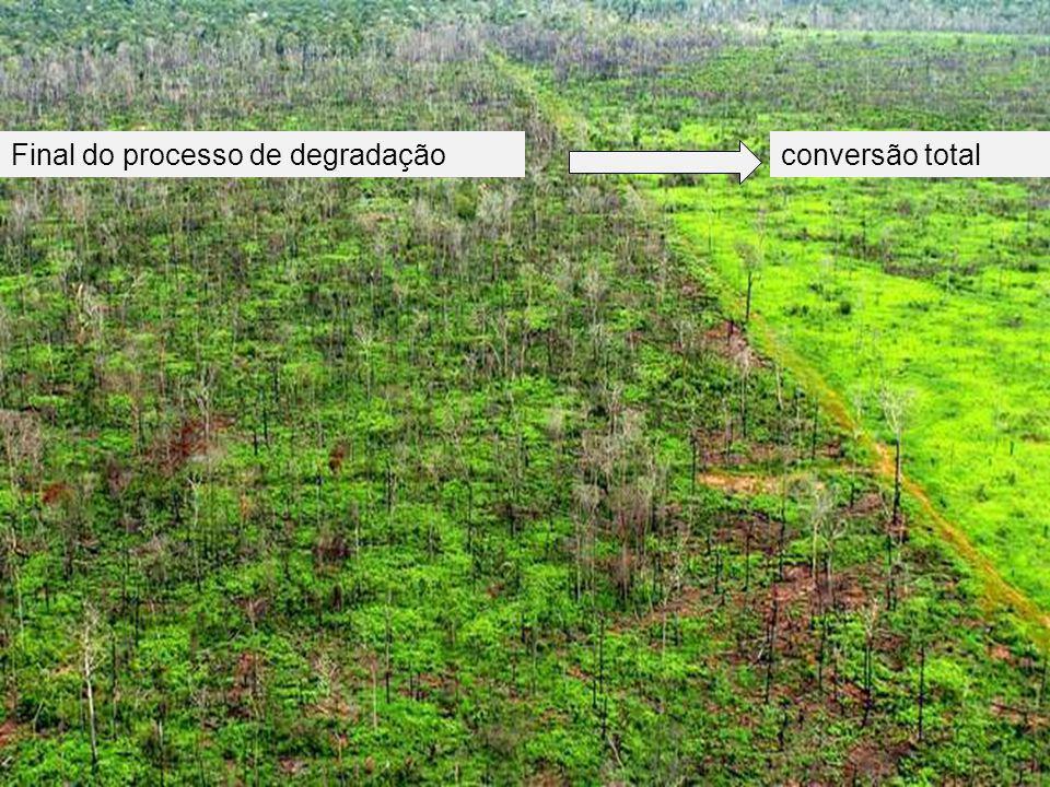 Monitoramento do Desmatamento Floresta Corte raso Corte raso – final do processo de desmatamento