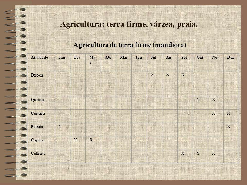 Agricultura: terra firme, várzea, praia.