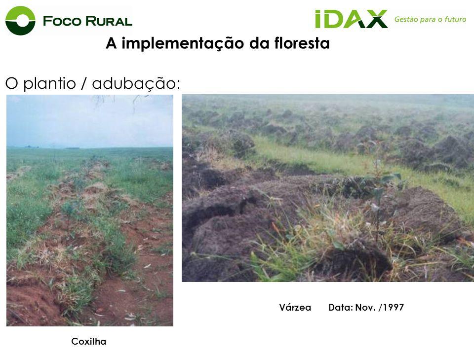 O plantio / adubação: Várzea Data: Nov. /1997 Coxilha A implementação da floresta