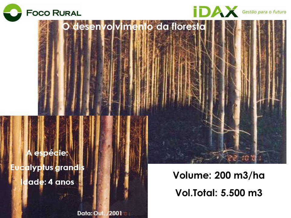 . Área: 31,28 ha Volume: 200 m3/ha Vol.Total: 5.500 m3 O desenvolvimento da floresta Data: Out. /2001 A espécie: Eucalyptus grandis Idade: 4 anos