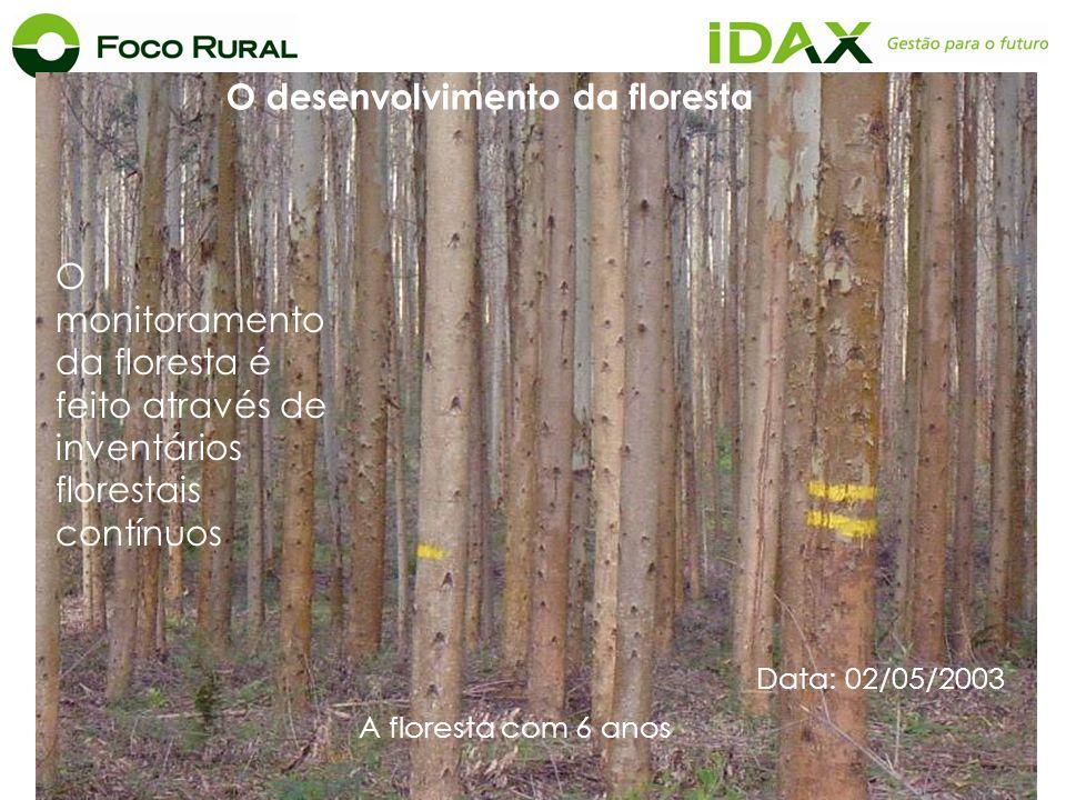 O monitoramento da floresta é feito através de inventários florestais contínuos Data: 02/05/2003 O desenvolvimento da floresta A floresta com 6 anos