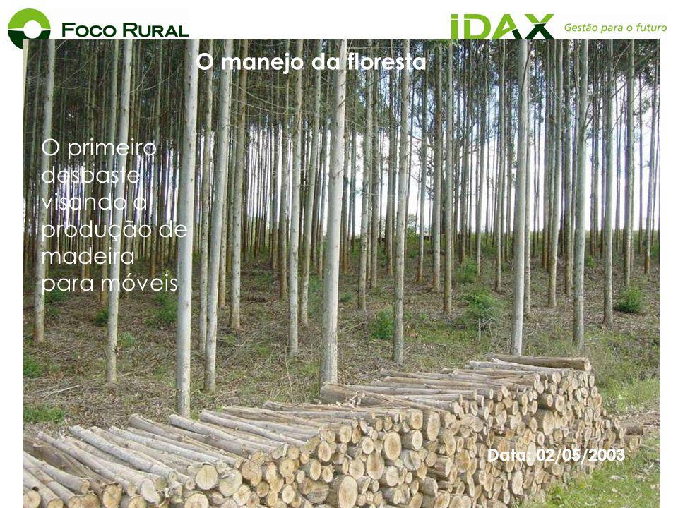 O primeiro desbaste visando a produção de madeira para móveis Data: 02/05/2003 O manejo da floresta