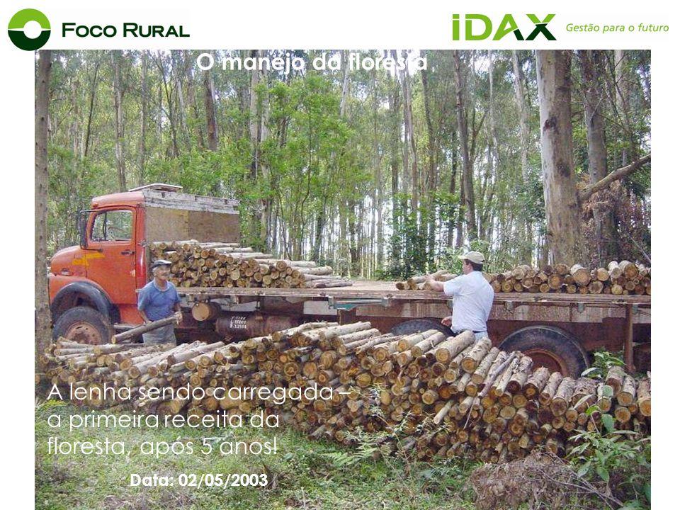 A lenha sendo carregada – a primeira receita da floresta, após 5 anos! Data: 02/05/2003 O manejo da floresta