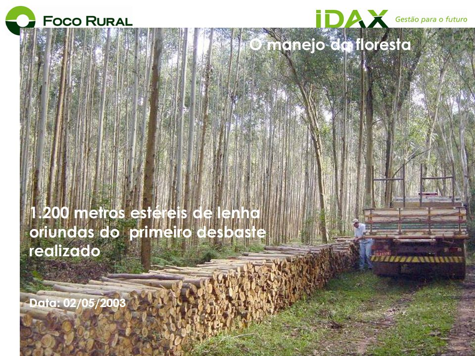 1.200 metros estéreis de lenha oriundas do primeiro desbaste realizado Data: 02/05/2003 O manejo da floresta
