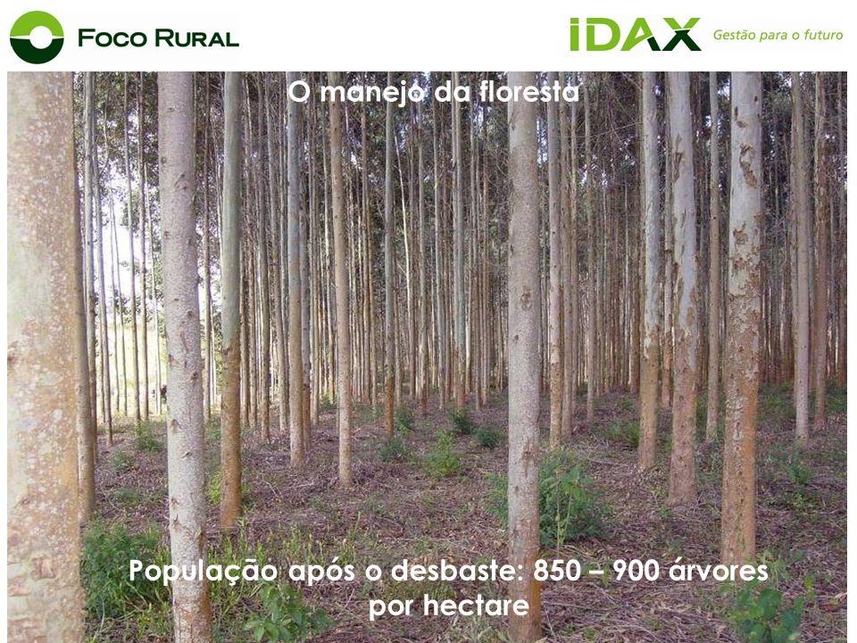 Data: 02/05/2003 O manejo da floresta População após o desbaste: 850 – 900 árvores por hectare