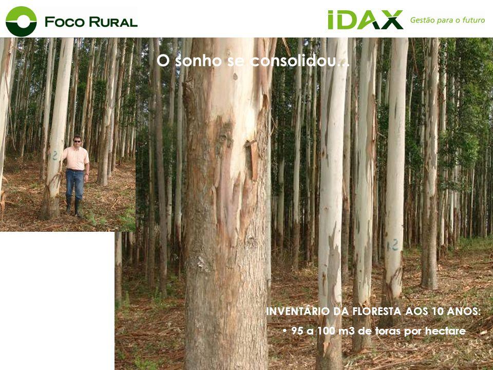 INVENTÁRIO DA FLORESTA AOS 10 ANOS: 95 a 100 m3 de toras por hectare O sonho se consolidou...