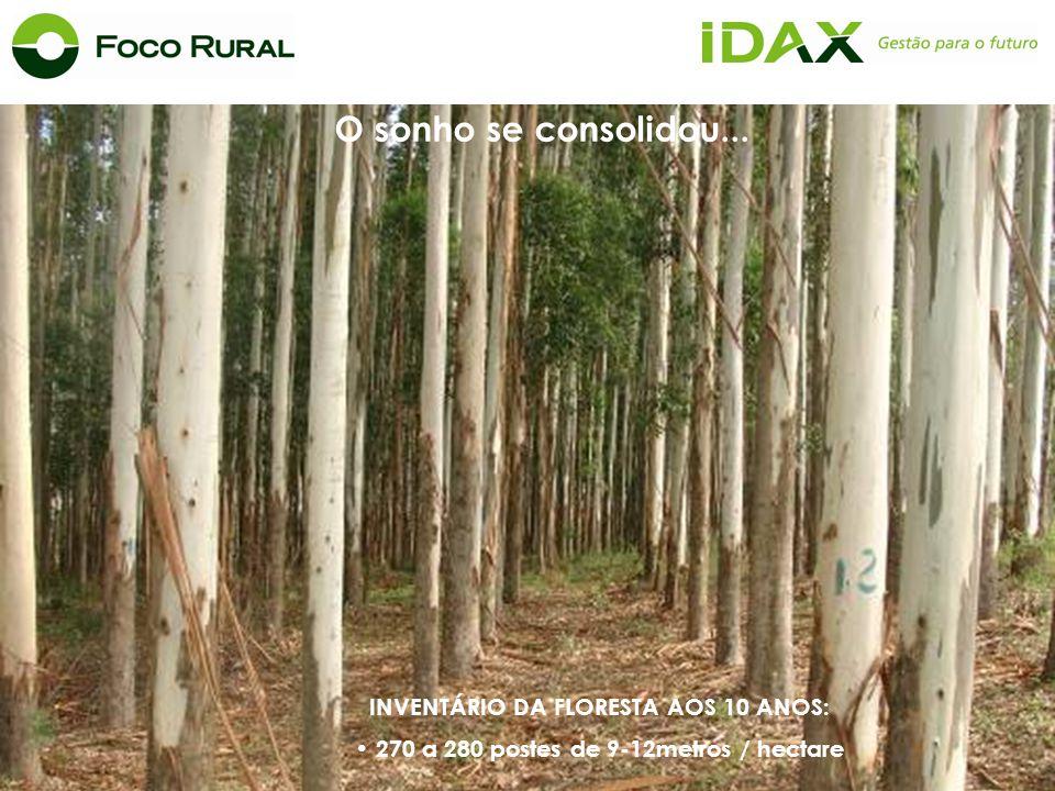 INVENTÁRIO DA FLORESTA AOS 10 ANOS: 270 a 280 postes de 9-12metros / hectare O sonho se consolidou...