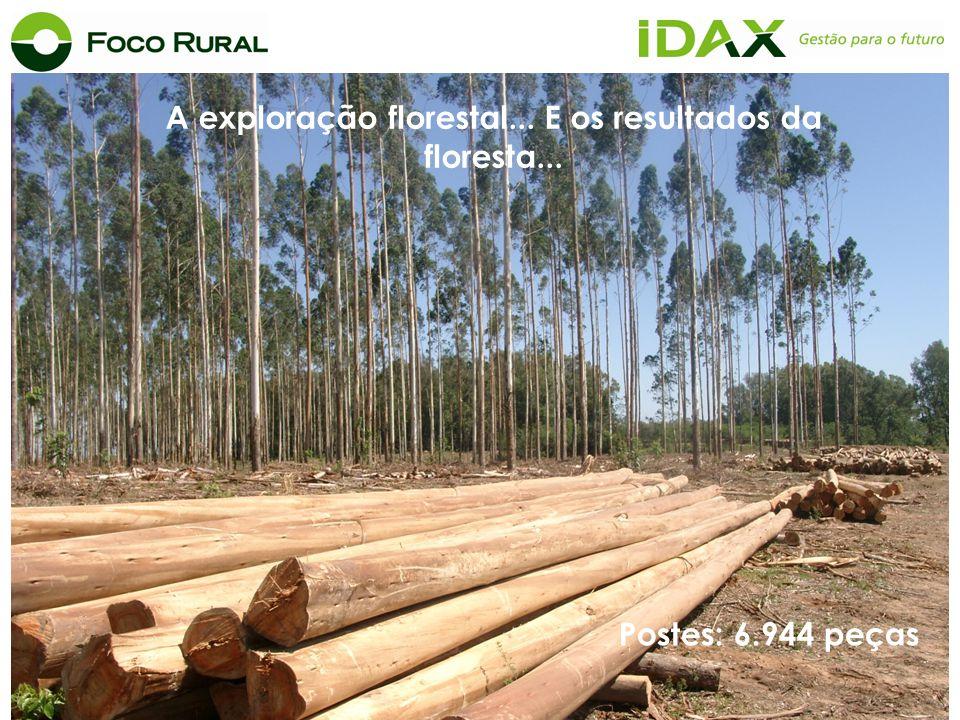 A exploração florestal... E os resultados da floresta... Postes: 6.944 peças