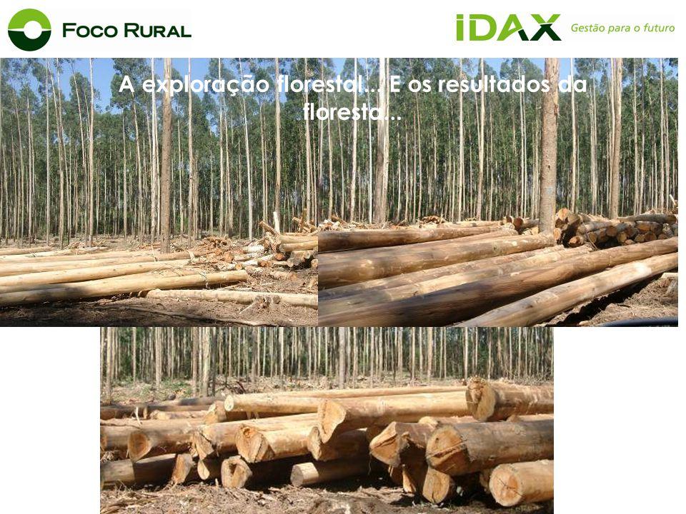 A exploração florestal... E os resultados da floresta...