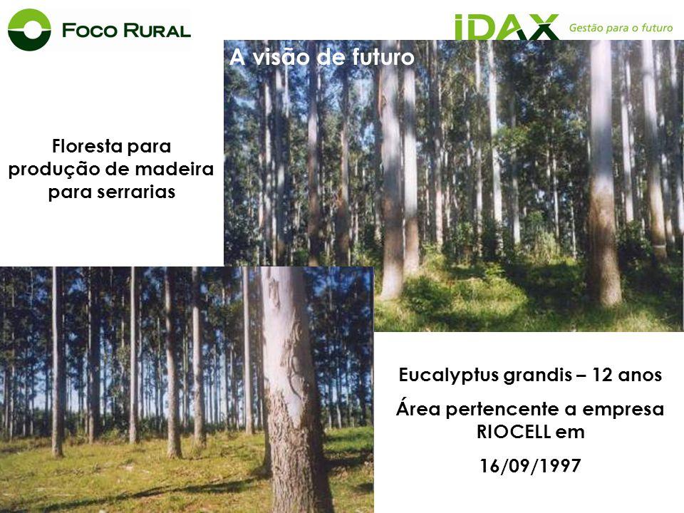 Floresta para produção de madeira para serrarias Eucalyptus grandis – 12 anos Área pertencente a empresa RIOCELL em 16/09/1997 A visão de futuro