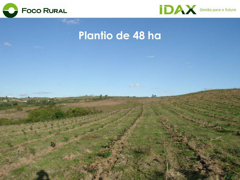 Plantio de 48 ha