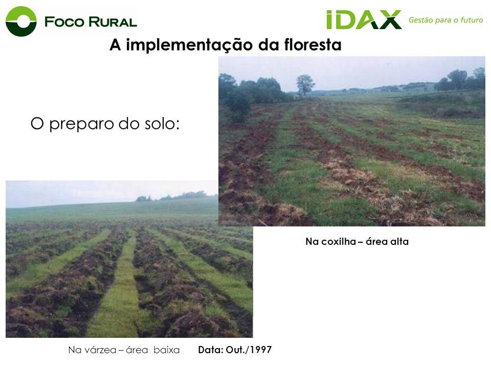 O preparo do solo: Na várzea – área baixa Data: Out./1997 Na coxilha – área alta A implementação da floresta